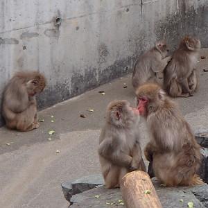 飯田市立動物園のサル